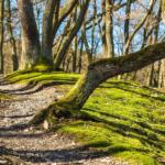 Comment éviter l'entorse à la cheville lors d'une randonnée?